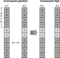 Crossover single point. Due cromosomi binari 'genitori' si scambiano materiale genetico (porzioni in rosso) generando due nuovi cromosomi ' figli'. Il punto di rottura dei cromosomi viene scelto casualmente.